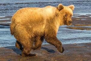 Alaska-MWT-blog-bear2