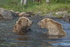 Bears-Norway-PWP-blog